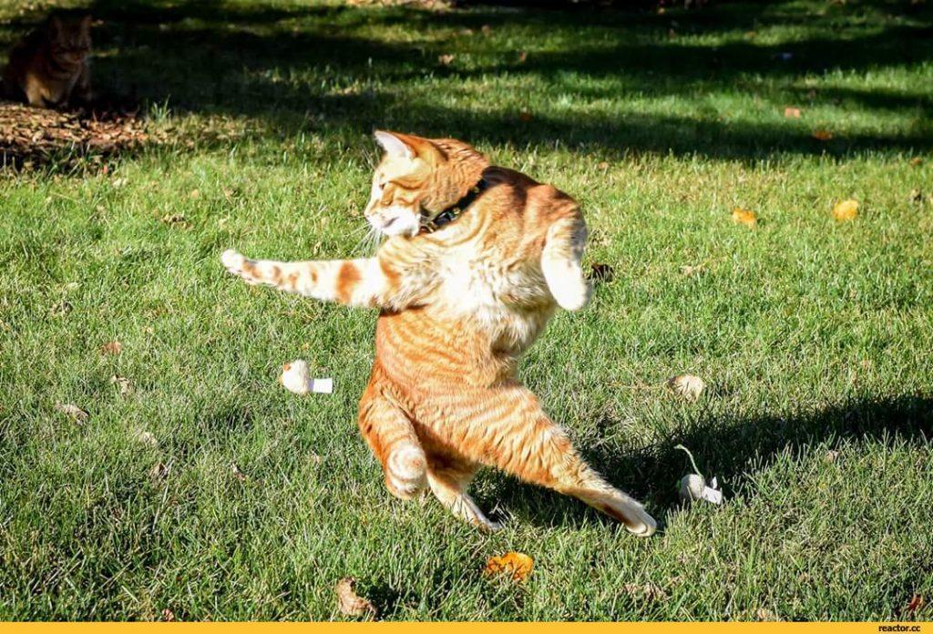 продолжая ржачные фото с кошками наличии сухих корок