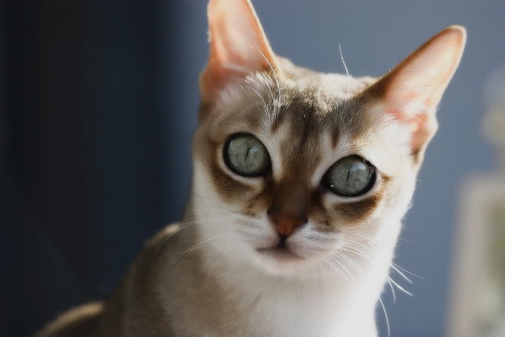 город, сингапурская кошка фото заметить, что тематика