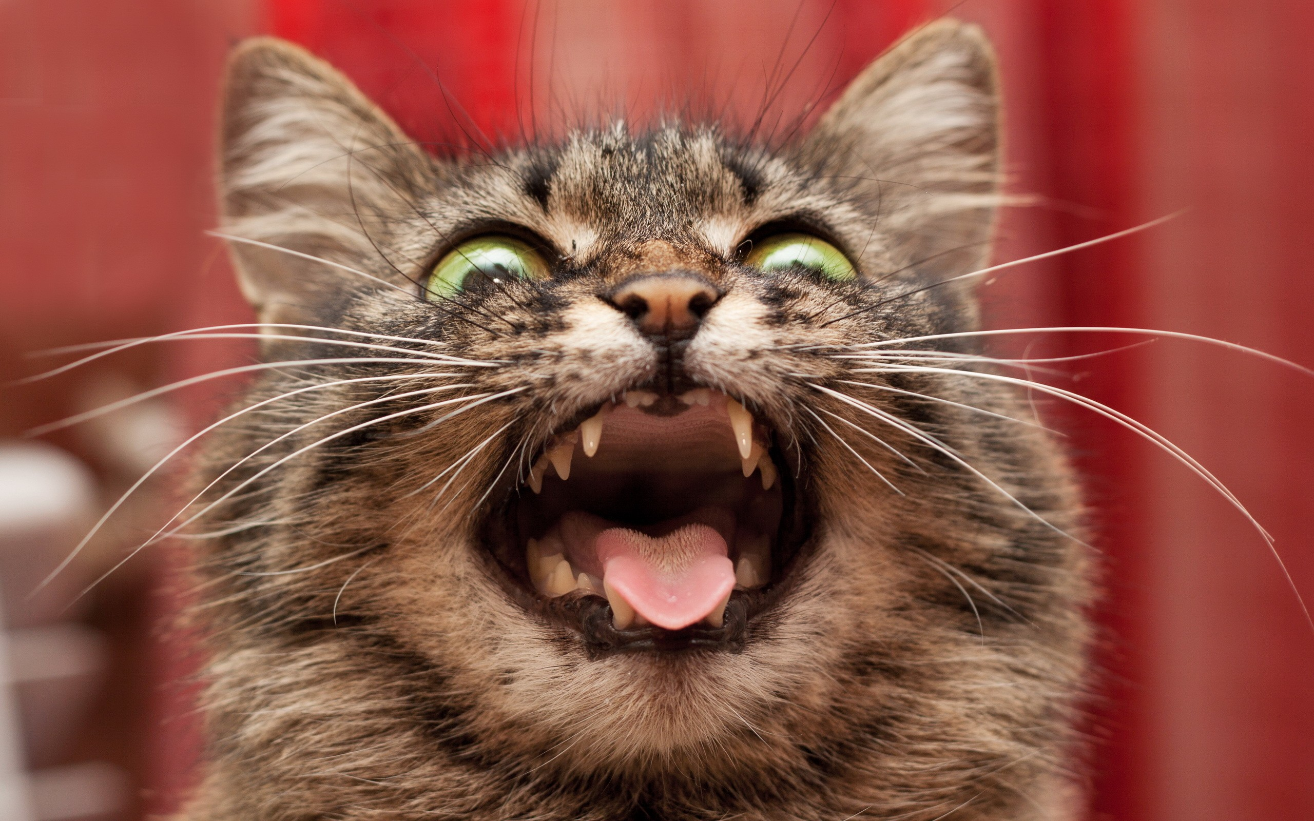 Смешные коты фото (50+)