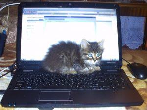Коту тепло на ноутбуке