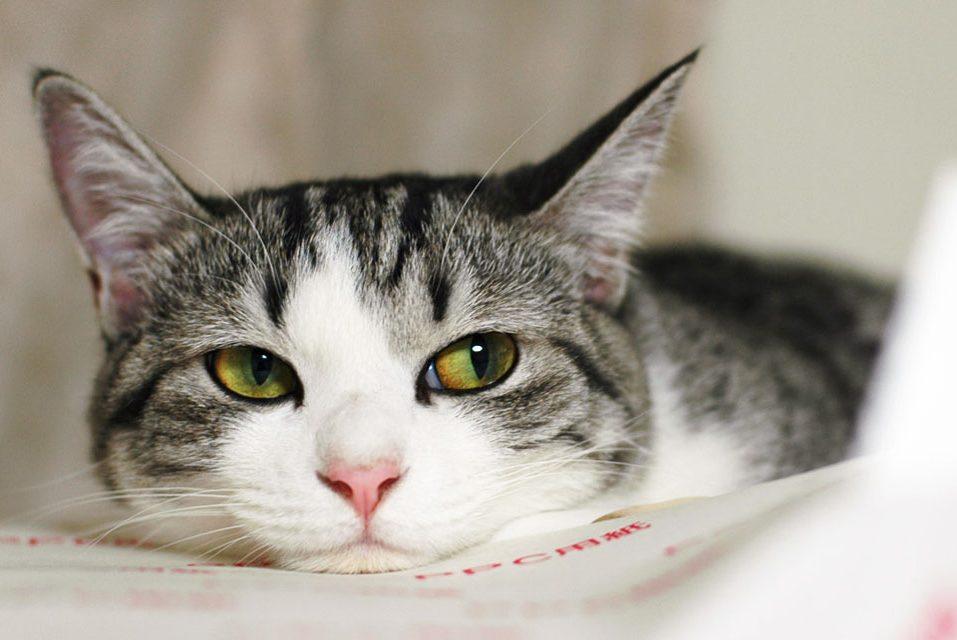 Чем опасны кошки для человека