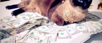 Самые дорогие кошки в мире в 2017 году