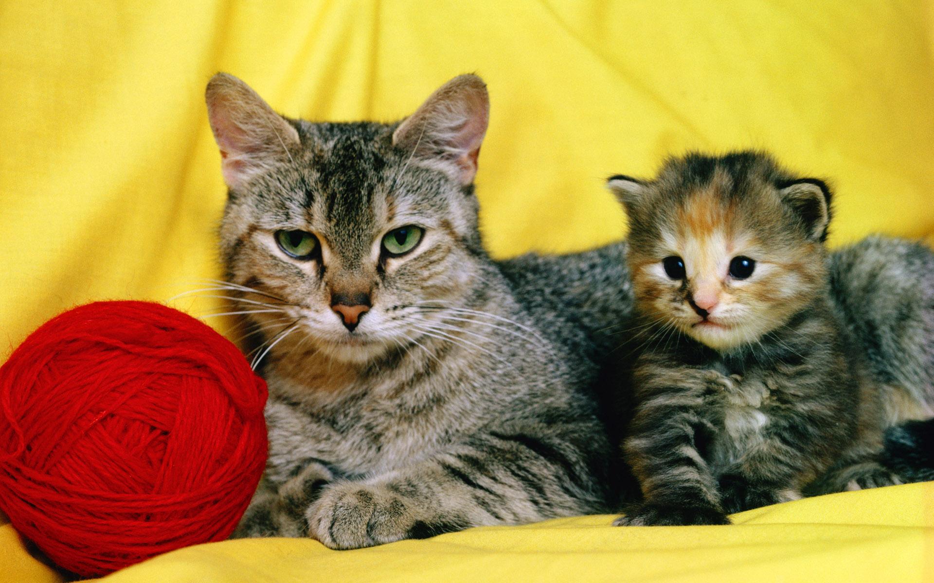 Картинка кошка и котенок