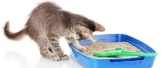 Виды наполнителей для лотков и кошачьих туалетов