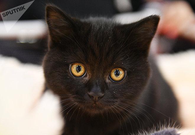 Стоит ли заводить дома черную кошку