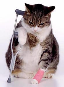 Доврачебная помощь кошке