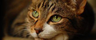 Что делать если у кошки долго не заживает рана