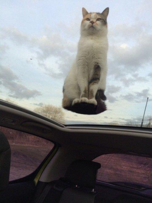Забавные котейки фото (20+)