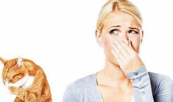 Как избавиться от запаха кошачьей мочи