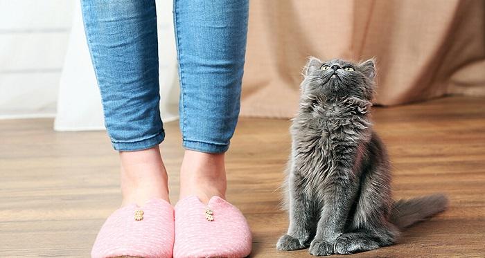 Можно ли нейтрализовать запах кошачьей мочи