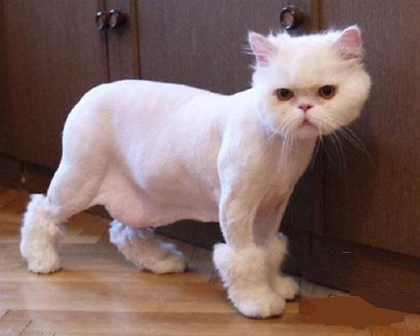 Сколько стоит подстричь кошку