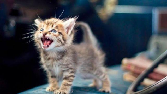 Если у котенка понос со слизью