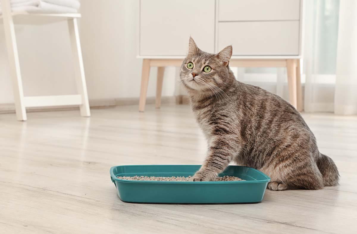 Профилактика диареи у котят