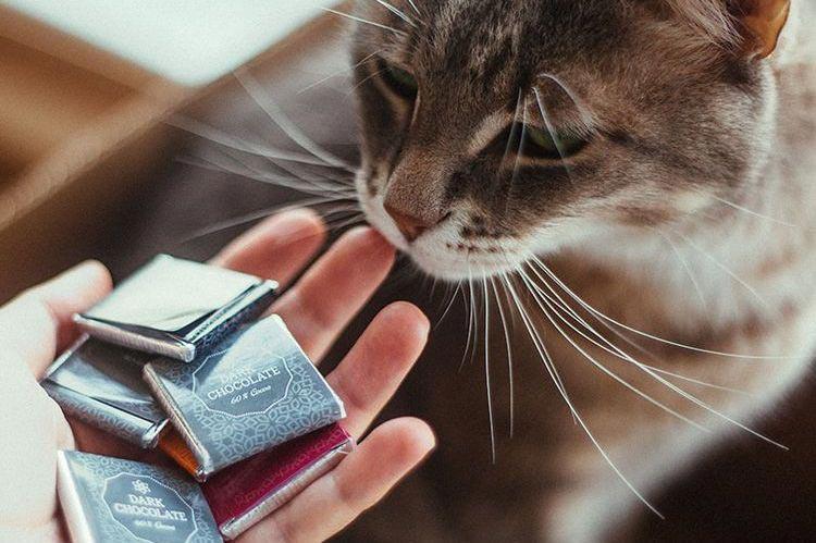 Органы, которые помогают кошке «видеть» окружающий мир