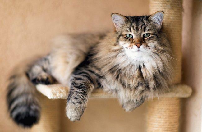 юность кошки