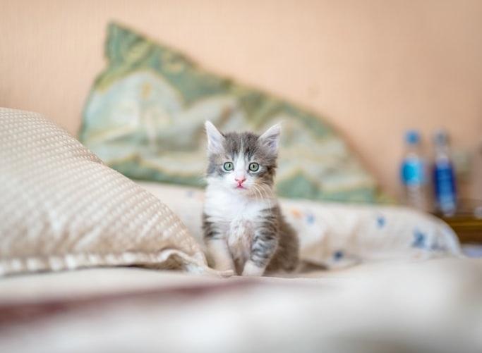 Как посчитать соотношение возраста кошки к человеку