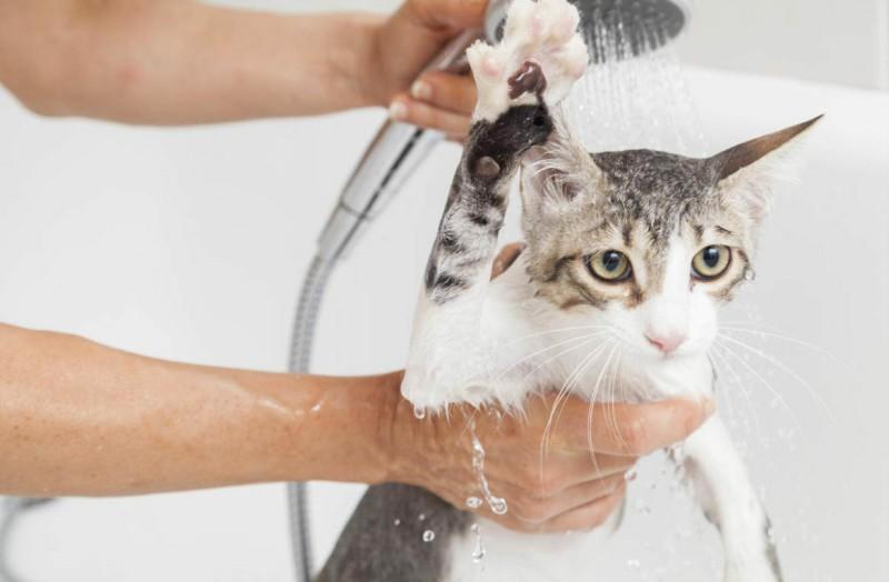 Как помыть кошку в первый раз