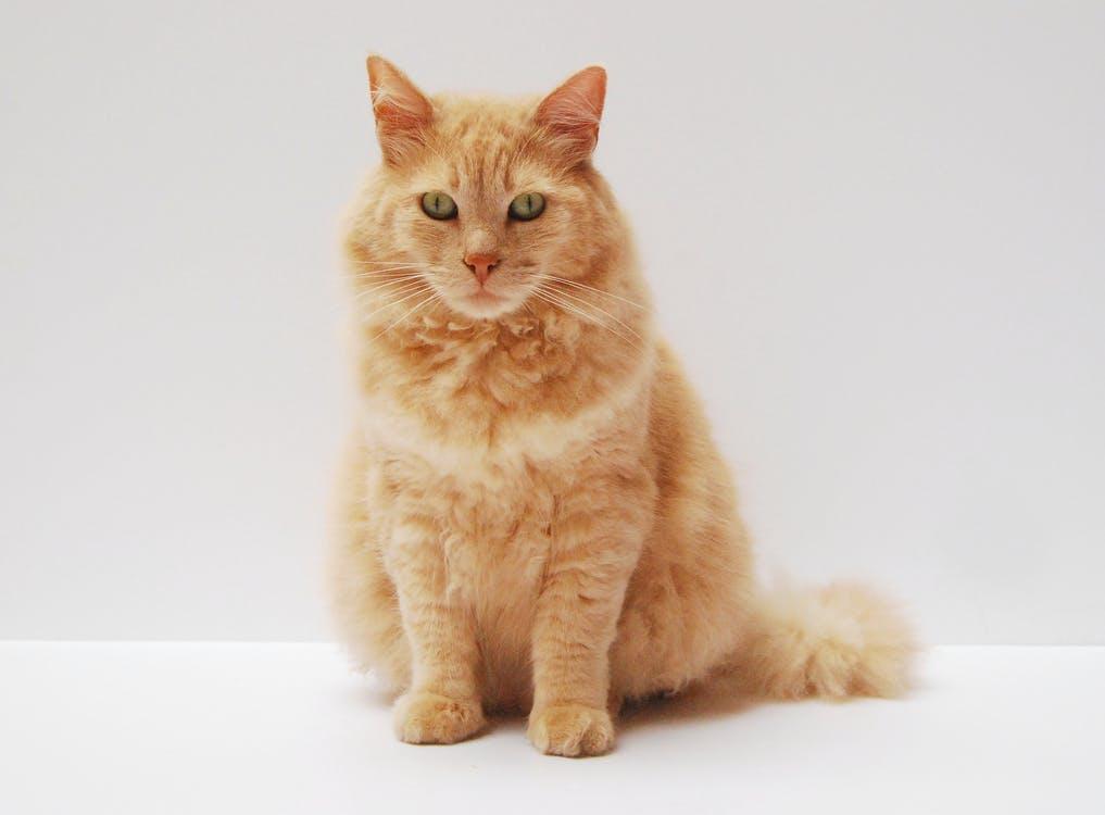 Красивые японские имена для кошек