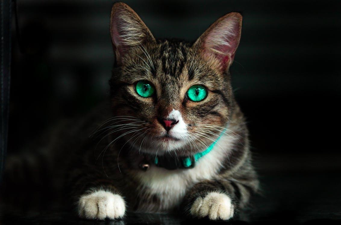 Красивое имя для кошки
