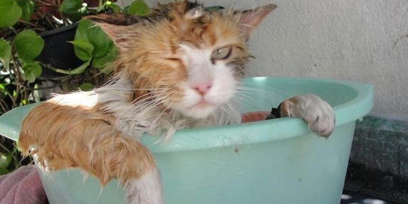 Кошки и вода