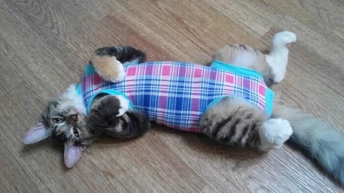 Как использовать костюмы для кошек