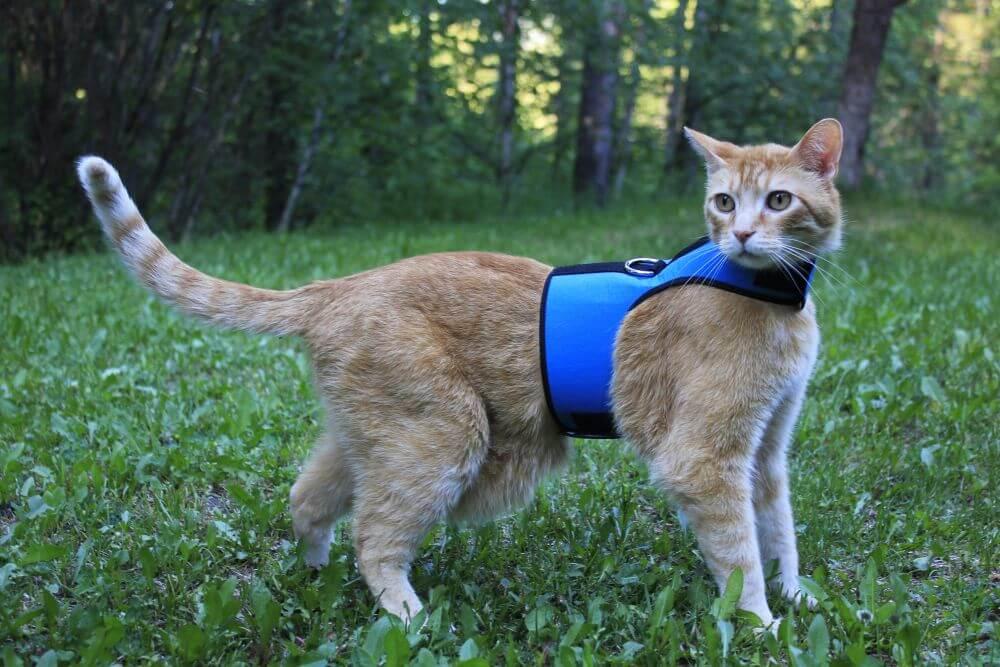 как выбрать шлейку для кошки