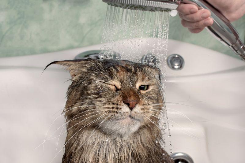 Кошки и вода: причины страха
