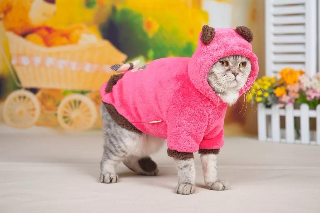 Зачем одевают кошек