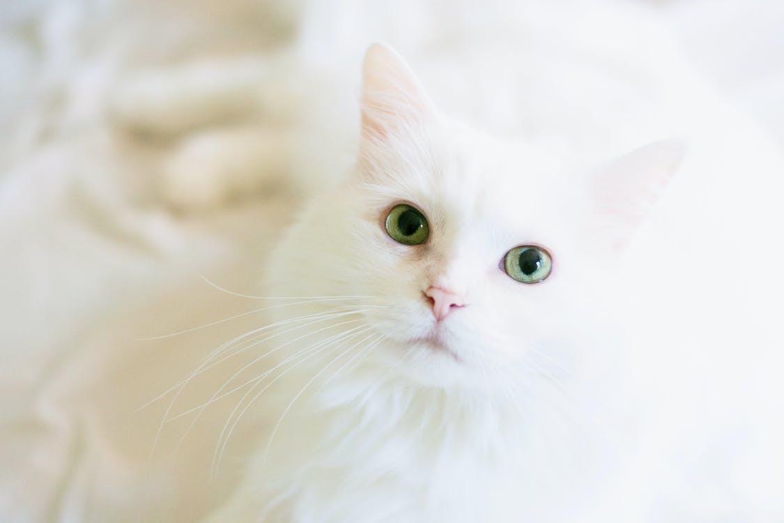 Историю возникновения кошачьего праздника