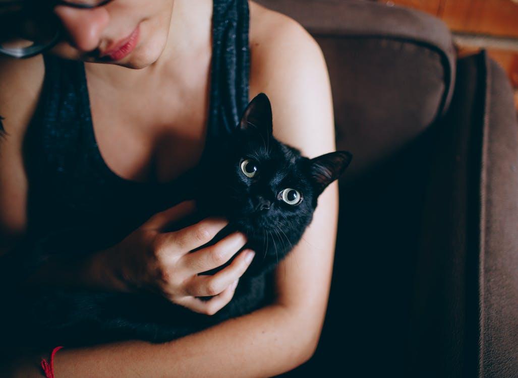 День кошек в италии