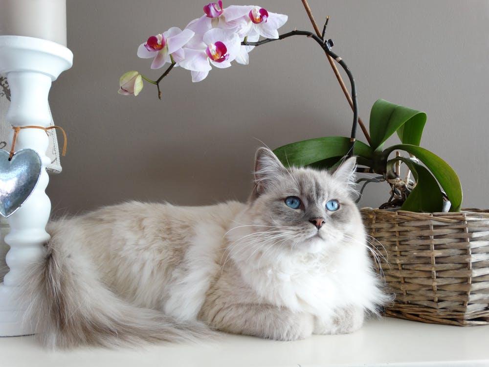 День кошек в Великобритании