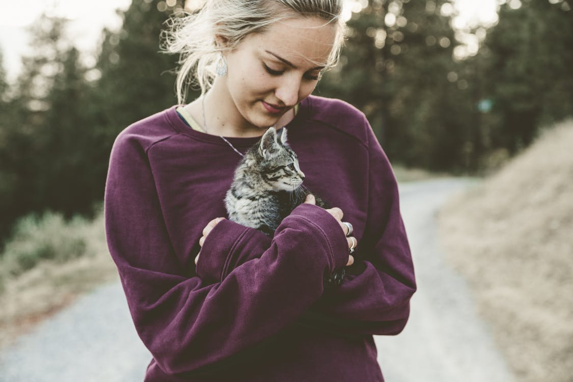 день котов в польше