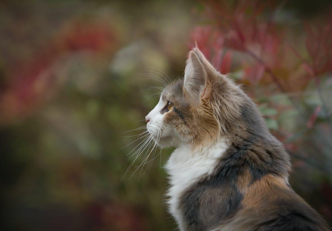День котов