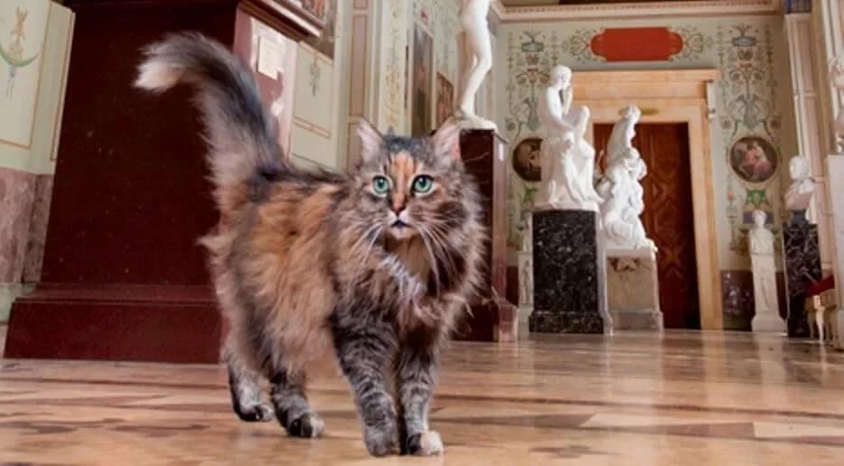 Праздник Эрмитажных котов