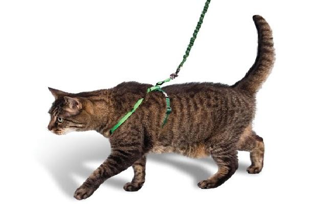 Рулетка для кошек какую выбрать thumbnail