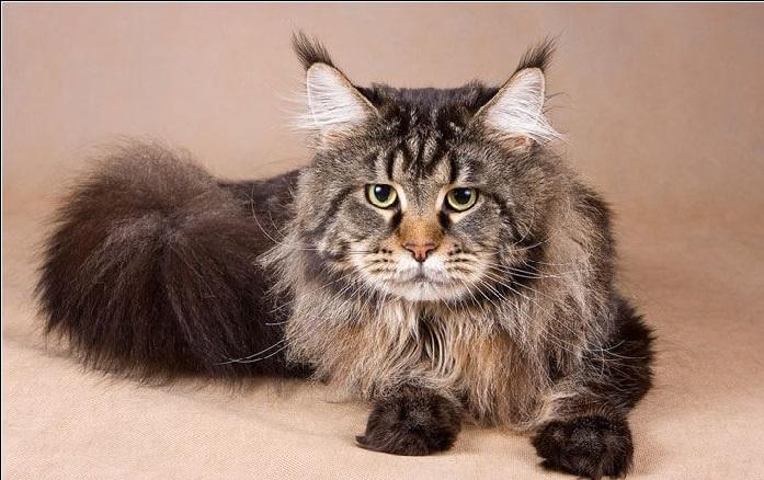 Как правильно ухаживать за шерстью котенка