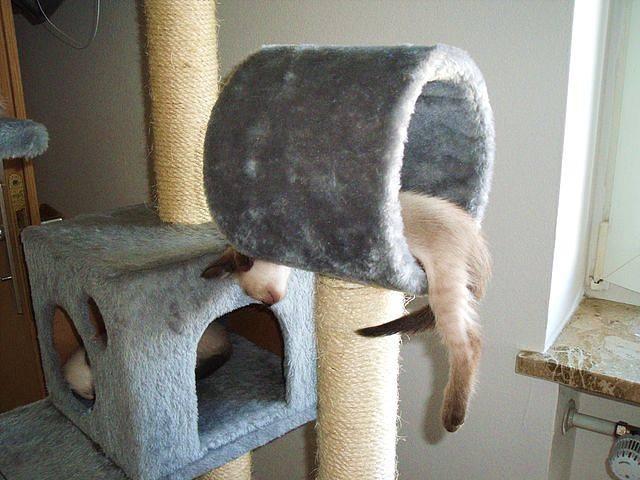 «Лазалка» для кота – для чего она нужна