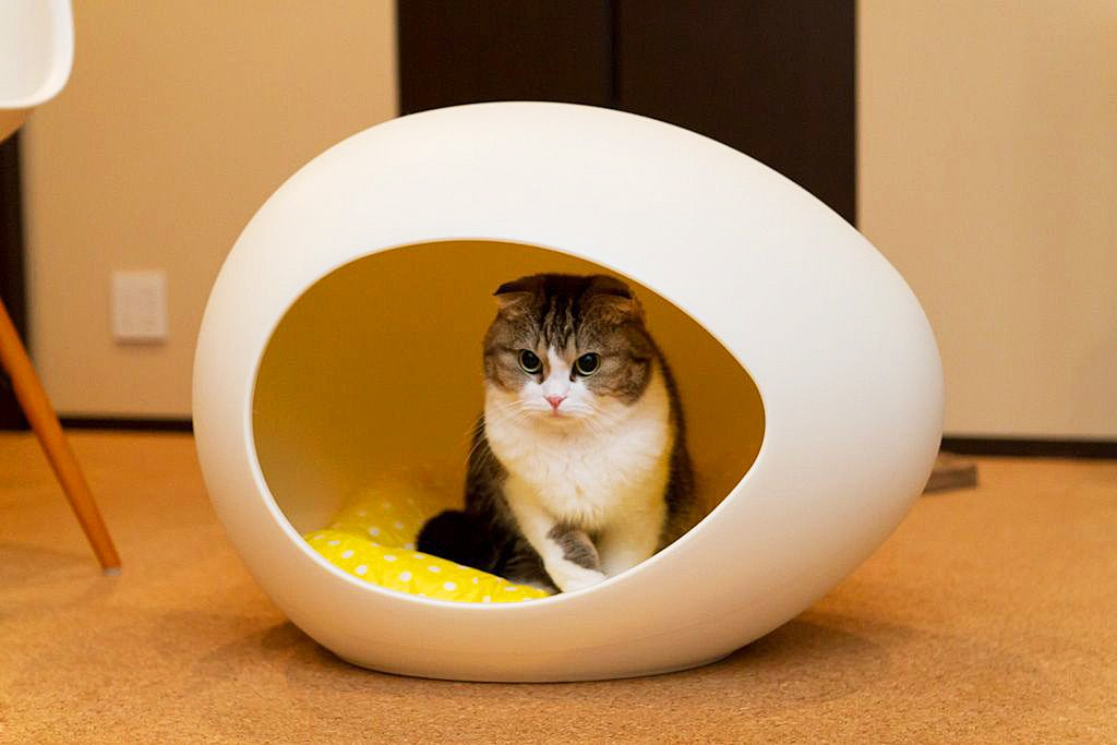 Как правильно выбрать домик для кошки