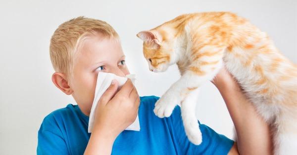Причины аллергии на котиков