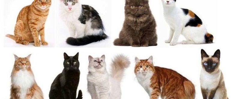 Какие бывают окрасы кошек