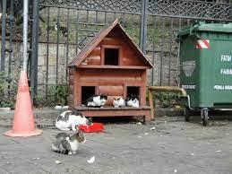 Место для уличного кошачьего домика